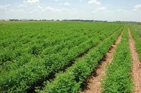 زراعة إربد الهطول المطري ساهم بزيادة مخزون التربة من الرطوبة