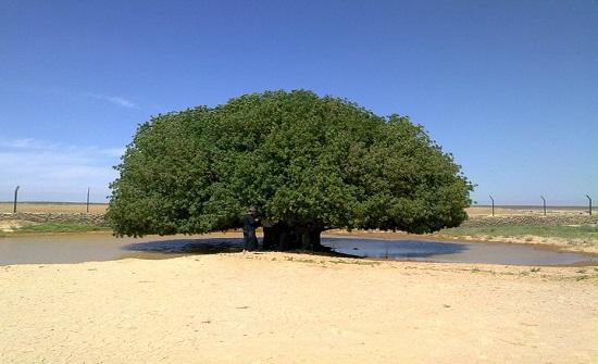 أشغال المفرق توصي بإعادة إنشاء طريق الشجرة المباركة