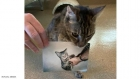قطة تعود إلى صاحبها بعد 15 عاما من فقدانها