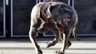 كلاب متوحشة تنهي حياة برازيلي بطريقة مخيفة