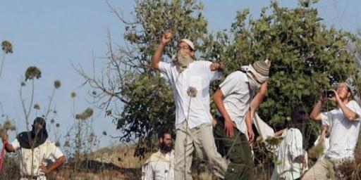 مستوطنون يعتدون على ممتلكات الفلسطينيين بالضفة الغربية